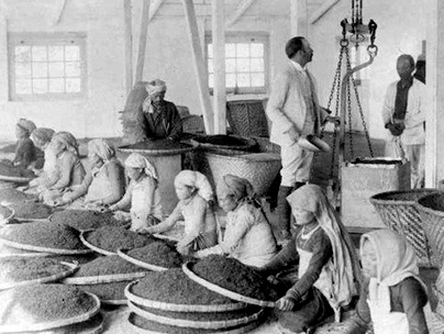 East Indian Company in Assam
